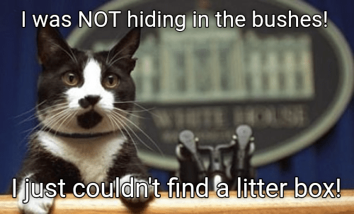 Funny cat meme making fun of Sean Spicer and his strange double talk.