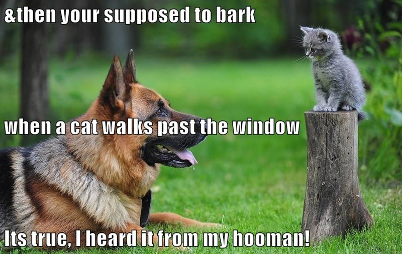 &then your supposed to bark when a cat walks past the window Its true, I heard it from my hooman!