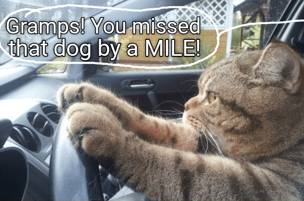 Funny meme of a cat driving with caption implying he is Grandpa and drove over a dog.