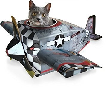 Cat in World War 2 style airplane box.