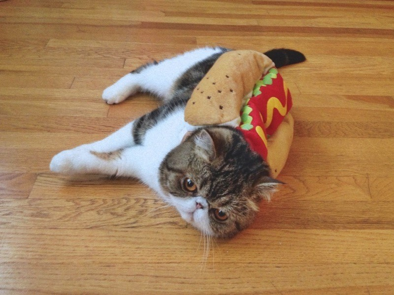 Funny pictures of cats dressed up - cat dressed up as hot dog.
