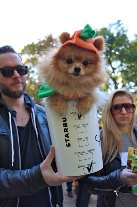 Cute fluffy dog dressed up as Pumpkin spice latte.