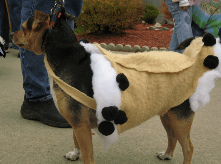 Funny picture of a dog dressed up as mixed flavors of ice cream.