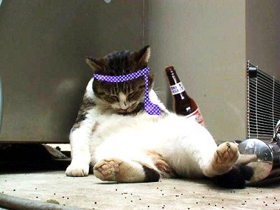 animals party - Cat