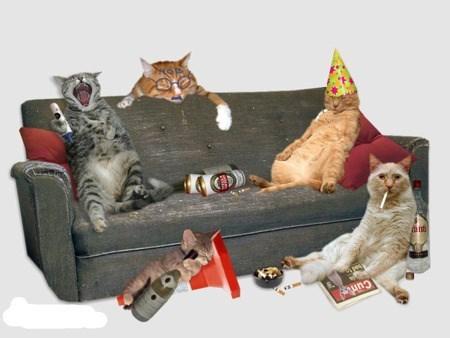 animals party - Cat - ant ung