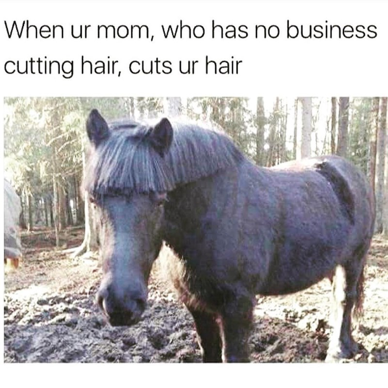 Horse with bad haircut as meme of when your mom cuts your hair.