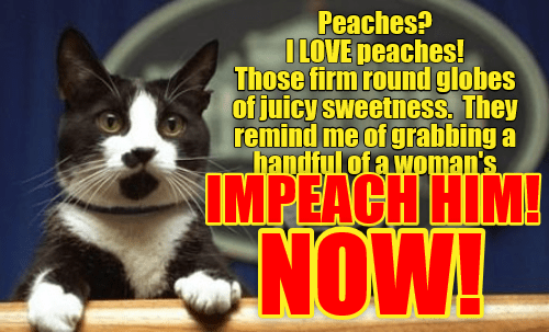 Whitehouse cat meme about impeachment and loving the fruit peaches.