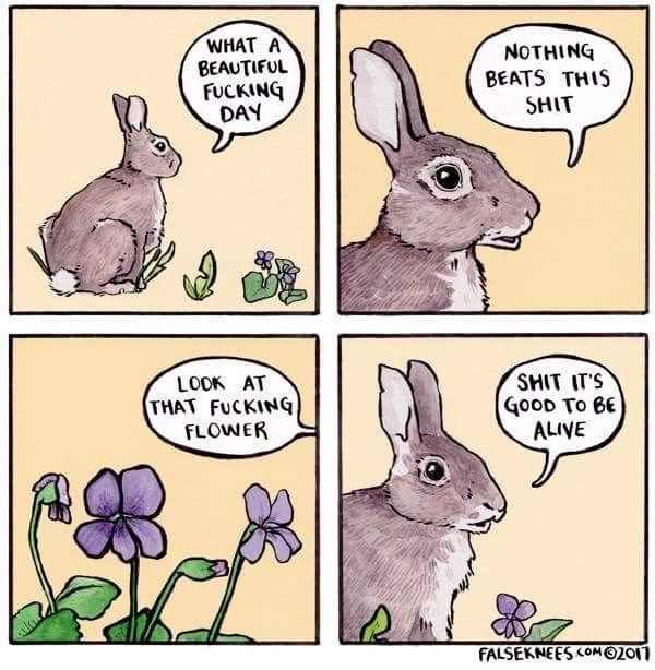 Funny web comic about a rabbit saying what a beautiful day it is to be alive, flowers.