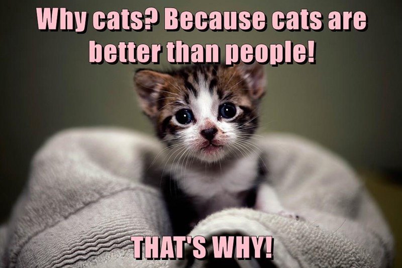 Cat meme of a cute kitten sitting on the lap with caption that cats are better than people.