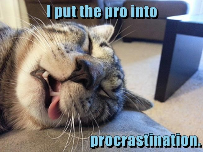Passed out cat with tongue out captioned as he put the PRO in procrastination.