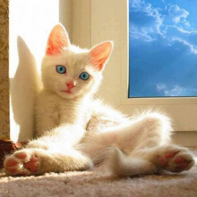 white cat with blue eyes sitting on a floor next to a window with a blue sky