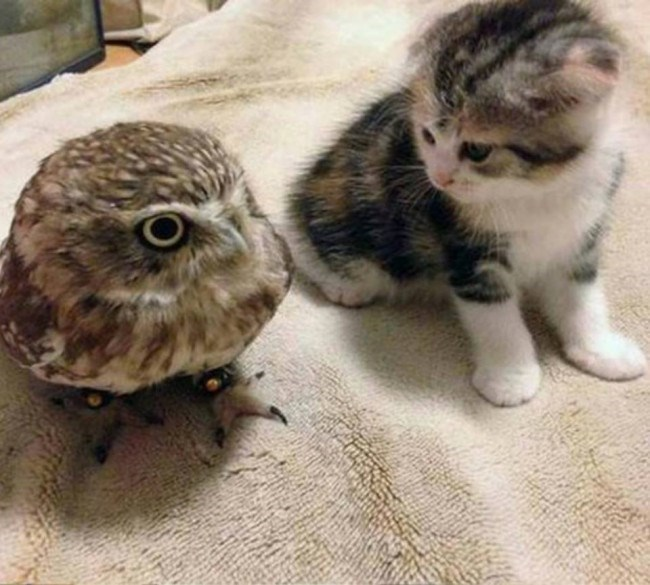 kitten staring at an owl while sitting on a bed