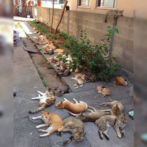 bunch of cats laying on a street in public