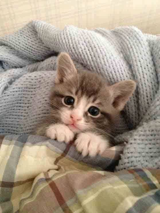 kitten under and blanket and has a pillow