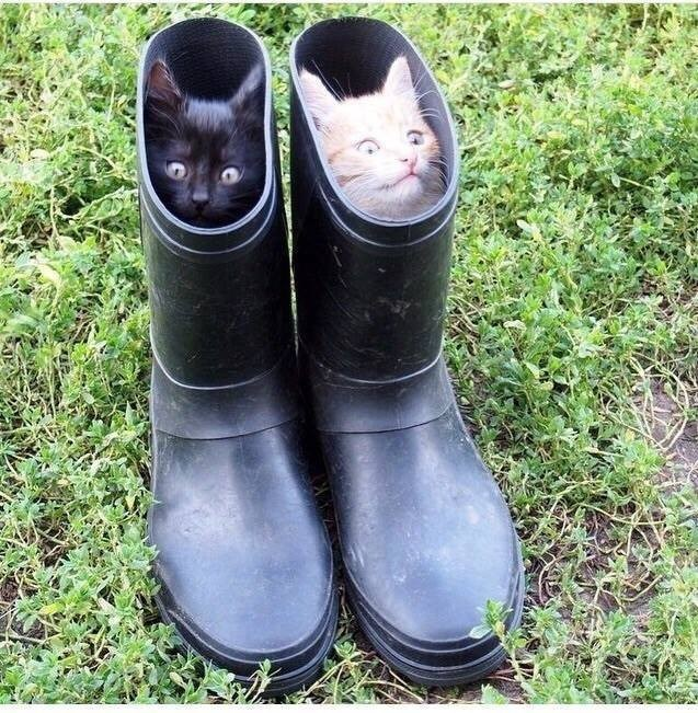 kittens sitting inside a pair of rainboots outdoors