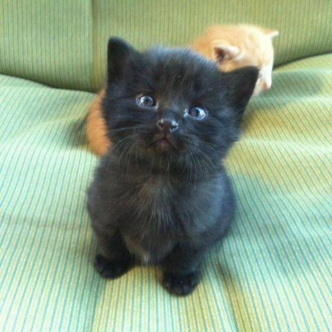 black kitten staring at the camera and sitting on a bed