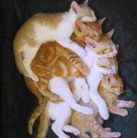 five cats laying on top of each other and sleeping