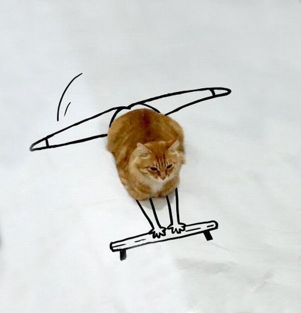 Funny illustration overlay of a cat that makes him look like Olympic athlete.