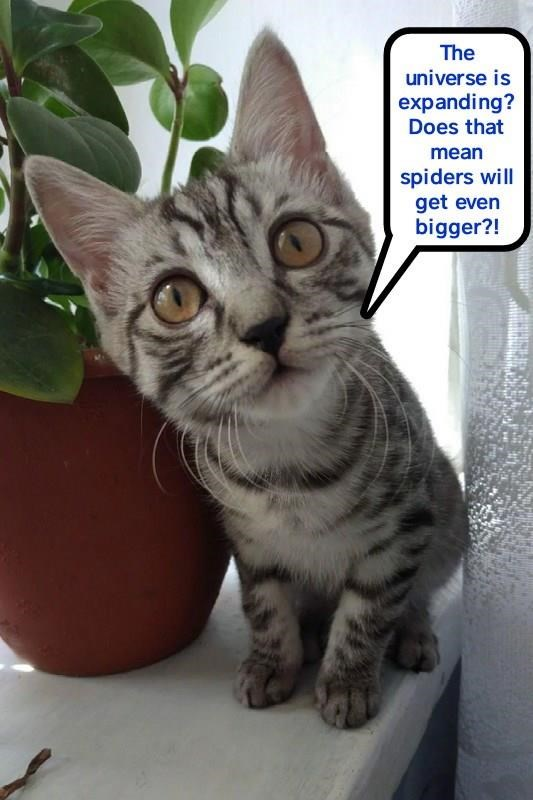 Cat meme about asking if the universe is expanding does that mean spiders will get bigger.
