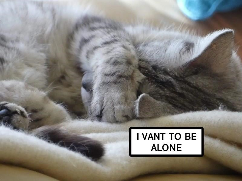 Cute meme of a cat trying to hide his eyes and captioned as if he is asking to be left alone.