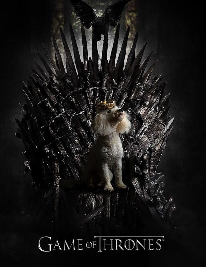 Dog photoshopped onto the iron throne in Game Of Thrones.
