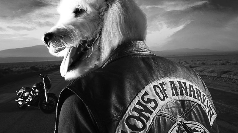 Dog photoshop awesome as main lead in Sons Of Anarchy