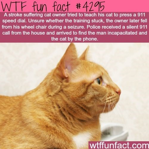 Awesome Cat Fact - Cat dialed 911 and saved owner after a seizure.