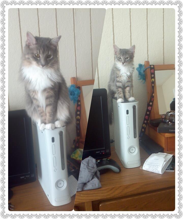 Cat - Ds