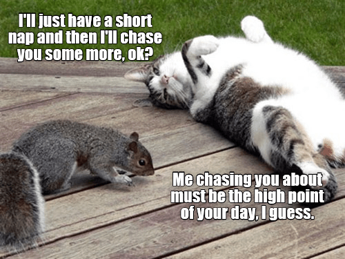Funny meme of a cat passed out and telling a squirrel that he will chase him later.