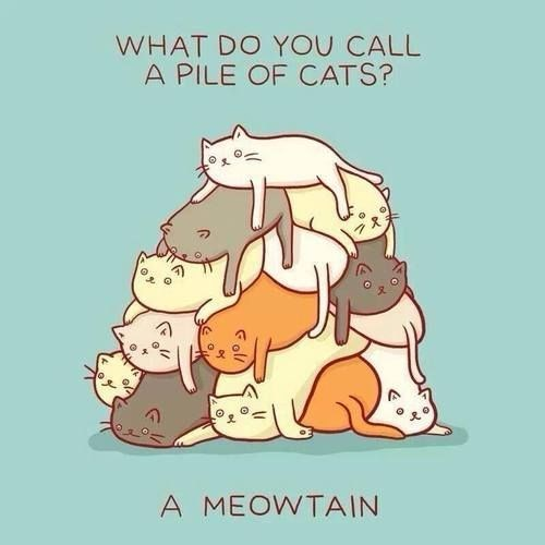 Illustration - WHAT DO YOU CALL A PILE OF CATS? A MEOWTAIN Foll