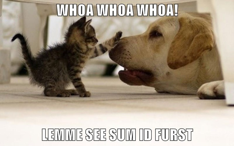Funny meme of a cat bopping a dog on the nose and captioned as WHOA, let me see some ID first but in cat LOL-speak.