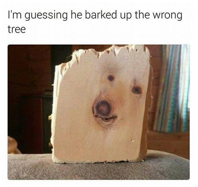 Funyn meme with a panel of wood that looks like there is a dog in it, joke is that the dog barked up the wrong tree.