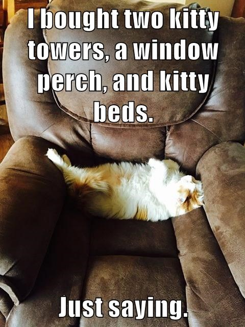 Photo caption - Tbought two kitty towers, a window perch, and kitty beds. Just saying.