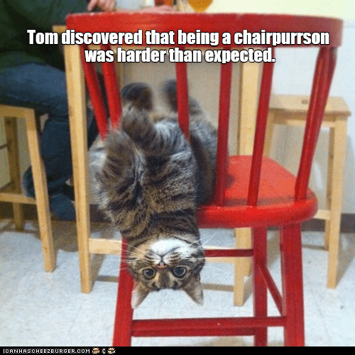 cat harder expected caption chairpurrson - 9036068096