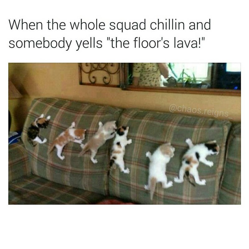 "Funny meme of cats on sofa, caption reads: ""when the whole squad is chillin and somebody yells that the floor is lava."""