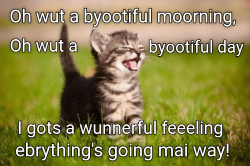 Cute meme of a kitten enjoying the beautiful sunshine of the morning.