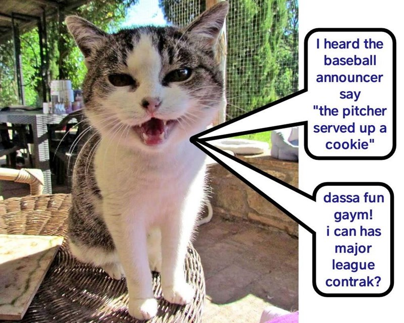 Funny cat meme of a kitty that wants a contract to play major league baseball.