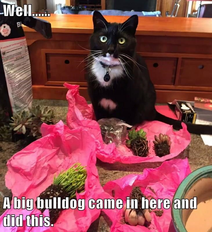 Cat meme of a kitty that made a mess and is now trying to blame it on the dog.