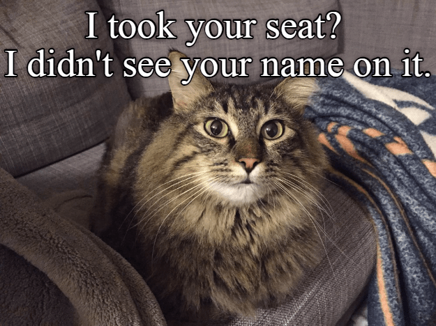 Funny cat meme of a seat kitty took from you because it lacked your name on it.