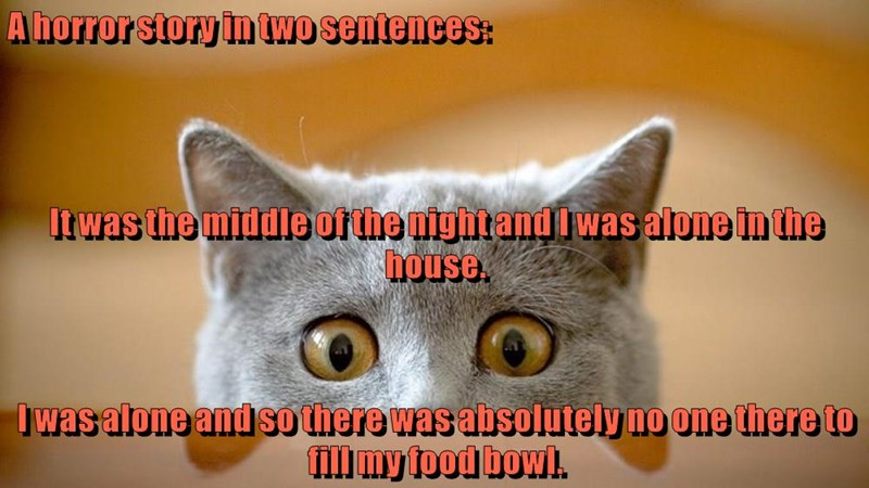 Cat meme of a horror story in which in the middle of the night, no one was awake to give kitten more food.