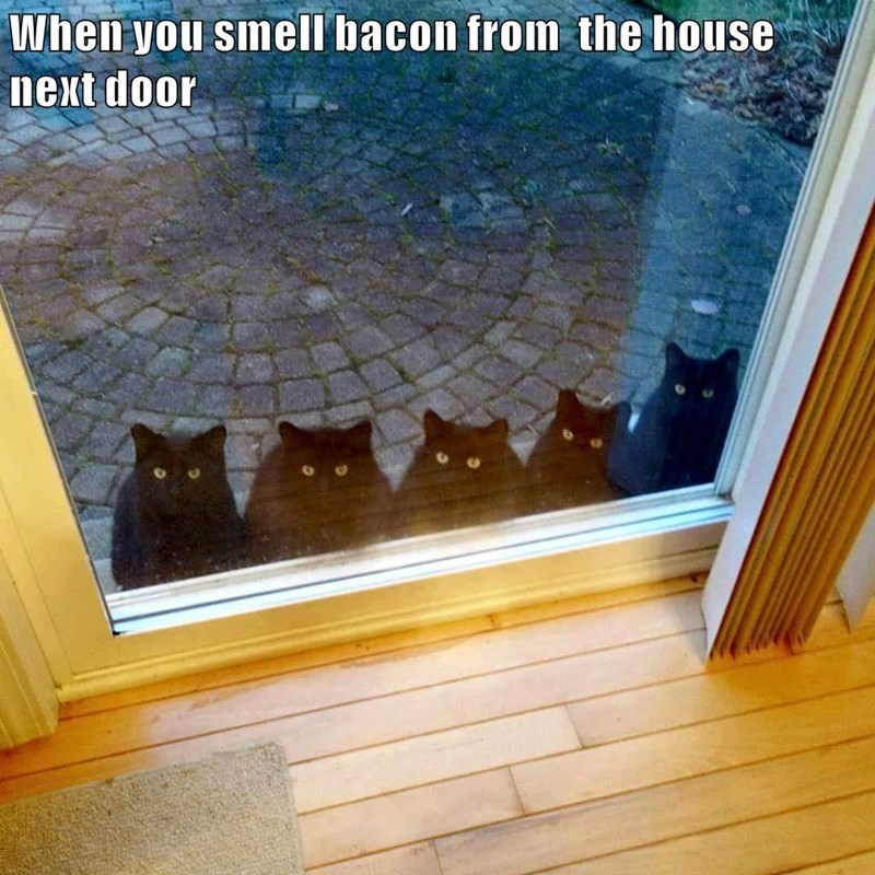 Funny meme of cats who smell bacon next door.