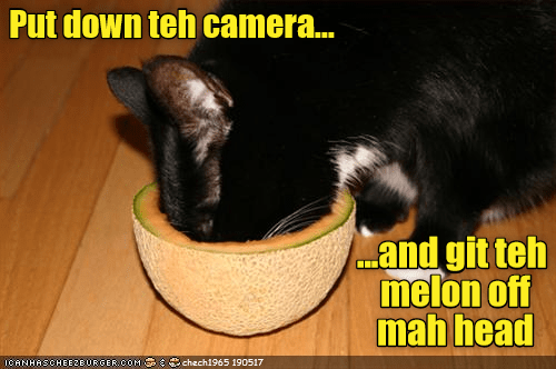 Funny picture of a cat with his head in a cantaloupe and captioned to get this melon off his head.