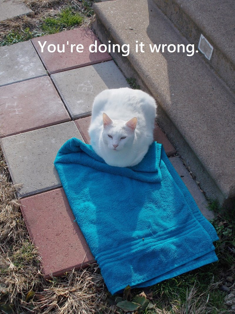 Funny picture of a cat having a sitting wrongly on the towel that has been put out for him.