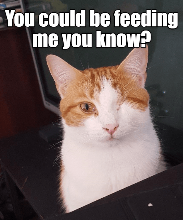 Funny picture of cat that looks like he is winking captioned to joke that you could be feeding him.