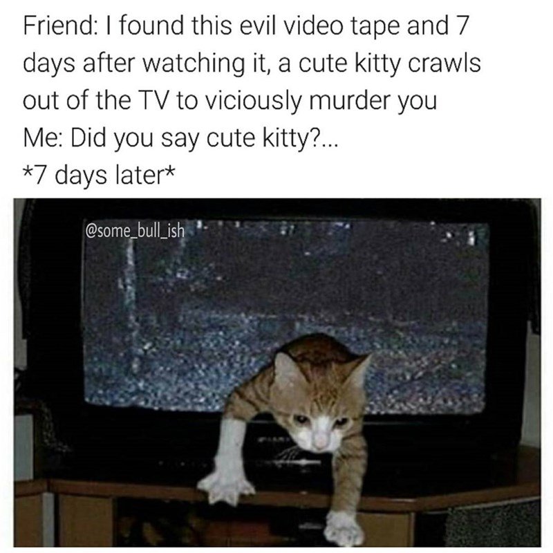Funny meme about an evil tape like in The Ring but instead of a girl coming out of the tv it's a cat.
