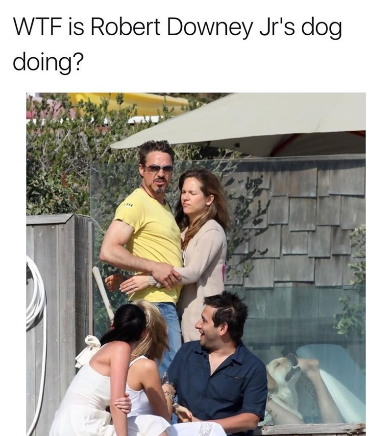 Funny meme featuring a photo of Robert Downey Jr, caption is asking what his dog is doing, and the photo of the dog makes it look like it's having sex with a woman.