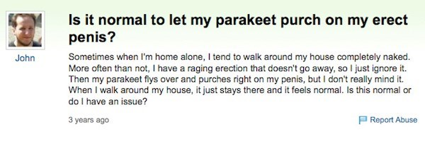 Yahoo answers question regarding if it is normal to have a parakeet perch on your erect penis when you are walking around naked in the house?