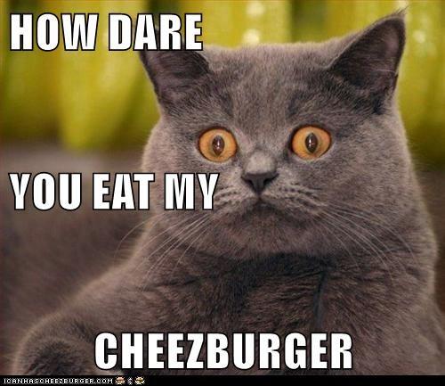 Cheezburger Image 9036530688