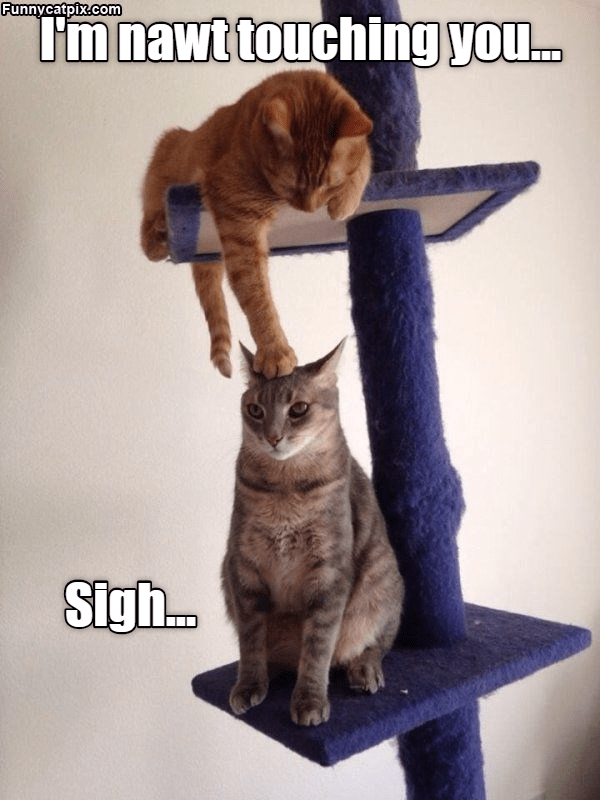 Funny meme of cat reaching down to the other cat and denying doing so.