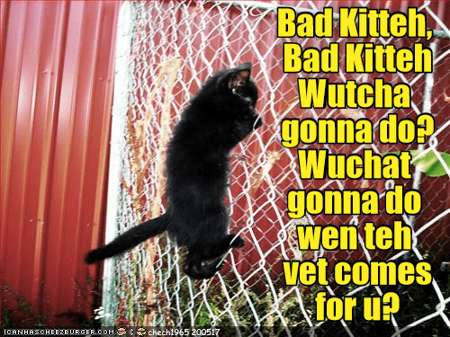 Black kitten climbing a fence with a caption similar to that song played at the beginning of the show cops.